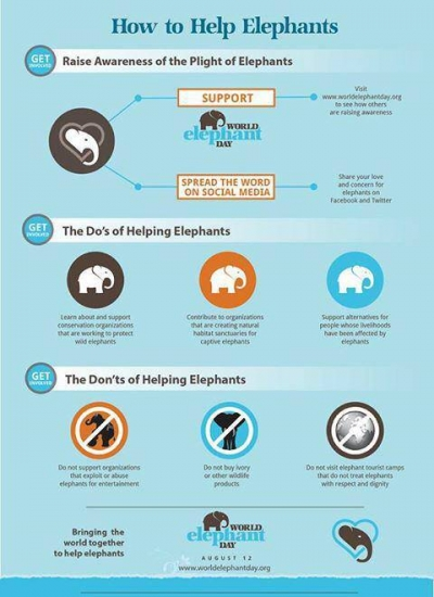How to help Elephants